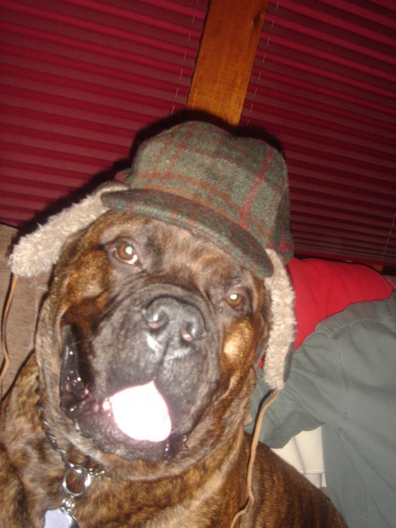 Buster Brown Bullmastiff